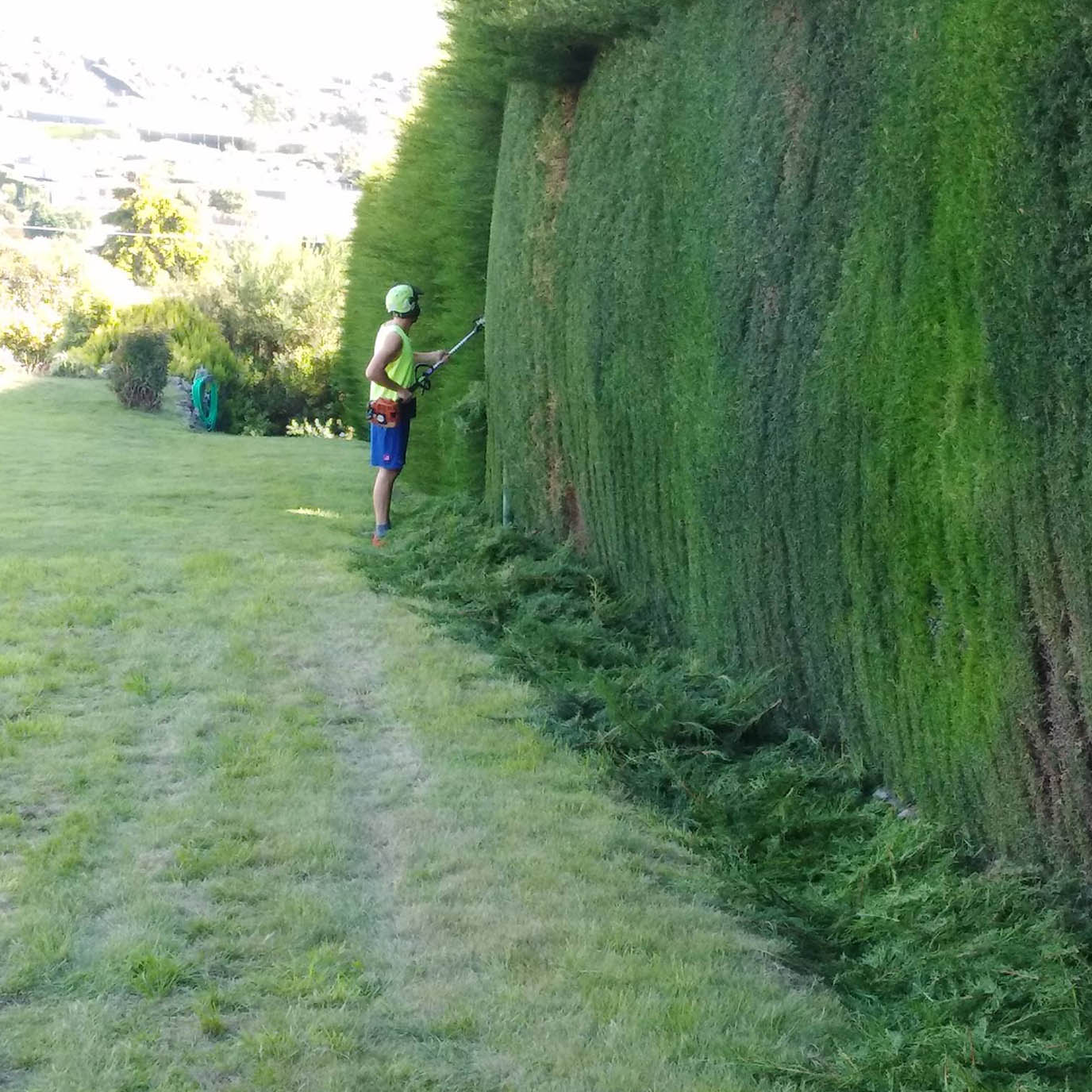 hedge trimming christchurch