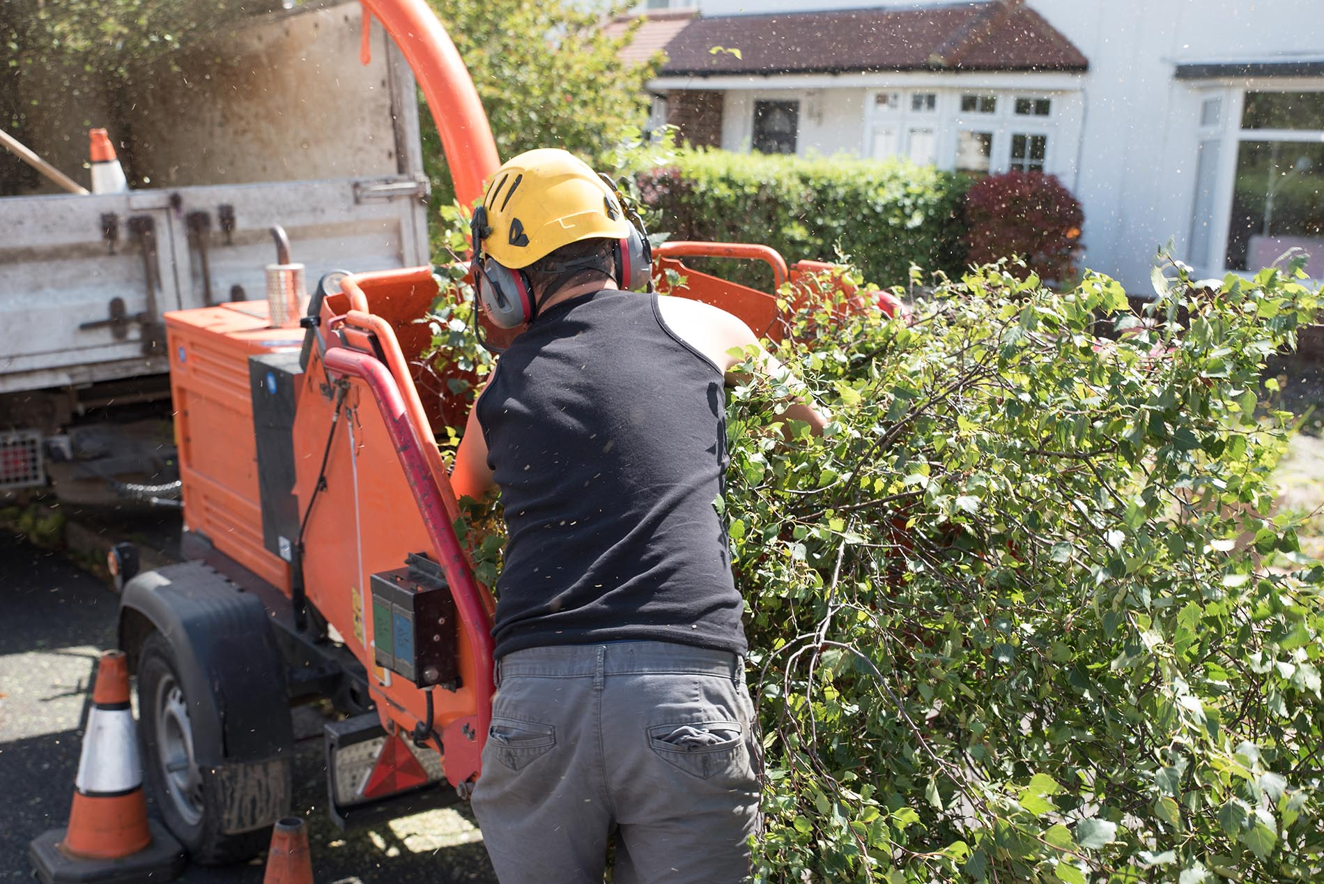 tree removal christchurch
